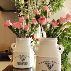 カーネーション/平屋/風景/キッチン/キッチン雑貨/住まい キッチンカウンターに 可愛い容器にカーネ…