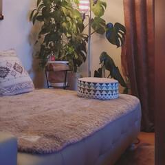 積水ハウス/平屋の家/ソファーベッド/リビング照明/フォロー大歓迎/インテリア/... 癒しの時間 夜干しから キッチンリセット…