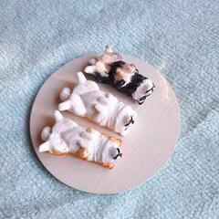 ハンドメイド/犬/へそ天/日本犬/北海道犬/柴犬/... 粘土で形造って色つけしました。