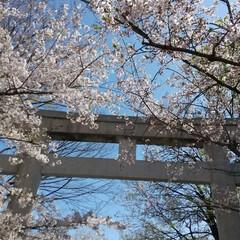 紅葉/桜/散歩 こんな時期なんで💦、、近所を(退屈してい…
