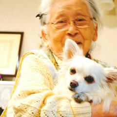 まったり/癒し/抱っこ/大好き/わんこ/家族団らん/... おばあちゃん大好き♥️