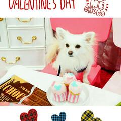 LIMIAペット同好会/LIMIAおでかけ部/ペット仲間募集/犬/わんこ同好会/スイーツ/... チョコで幸せが満ち溢れる~  バレンタイ…