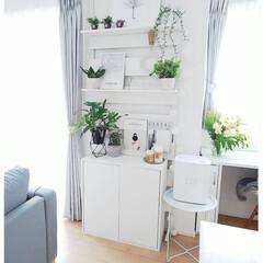 休日/ホワイトインテリア/ラダーシェルフ/ラダー/DIY/観葉植物/... お気に入りスペースDIY🌼 好きなポスタ…