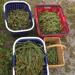 山菜 山菜採り! 昨日は娘と孫と蕨採り😊
