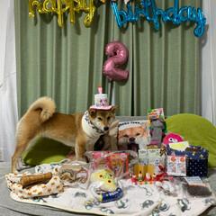 パーティー/2歳/お誕生会/フォロー大歓迎/ペット仲間募集/犬/... 1月24日 きなこ2歳のお誕生日でした🎂…