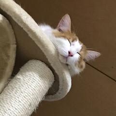 猫/うちの子ベストショット