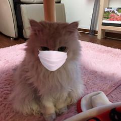 マスク/動物モチーフグッズ ⊂□⊃ヽ(・д`・。) はい、マスク💦 …