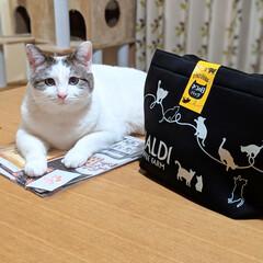 猫の日/猫の日バッグ/カルディコーヒーファーム/LIMIAペット同好会/フォロー大歓迎/ペット/... 2月22日と8月8日に発売される、カルデ…