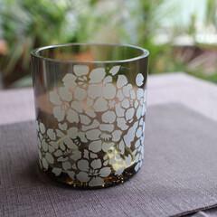 サンドブラスト/桜/ウィスキー/リサイクル瓶 リサイクル瓶をカットしてグラスを作りまし…