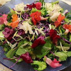 ワイン/サラダ/エディブルフラワー/ホームパーティ とても美しいサラダを作りました。 食べれ…