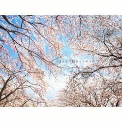 令和/空/桜/平成/春のフォト投稿キャンペーン/ありがとう平成/...  平成が終わるなんて本当でしょうか?