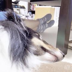 わたしのお気に入り 私の膝の上で寝てます😪