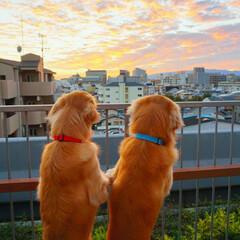 ゴールデンレトリバー/犬/LIMIAペット同好会/フォロー大歓迎/はじめてフォト投稿/ペット/... 2人で夕陽を眺めて語り合う。 やまと、く…