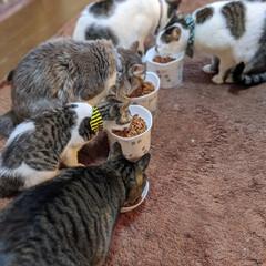 兄妹猫/ペット同好会/にゃんこ同好会/猫の日/長毛猫/キジシロ/... 2020.2.22🎶 猫年😸猫の日💓💞 …