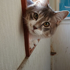 保護猫/ねこにすと9 今日から、マルイ有楽町で開催されている …(1枚目)