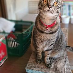 カワイイ/ねこ好き/うちのこベストショット/LIMIAペット同好会/ペット仲間募集/猫/... この見上げる仕草、大好き︎💕︎💕