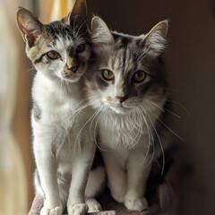 多頭飼い/ペット同好会/にゃんこ同好会/長毛猫/キジシロ/兄弟猫/... おひとり様用のタワーのてっぺんに無理矢理…