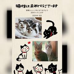 我が家のにゃんこ達/ペット同好会/長毛猫/キジシロ/キジトラ/猫年/... 明けましておめでとうございます🎍 今年も…