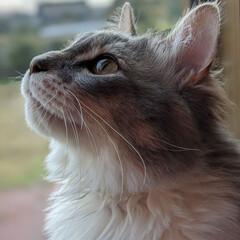 ふわもこ/横顔がかわいい/ねこ部/ねこ好き/ねこ/長毛猫/... お外が気になるにゃん😸🎶