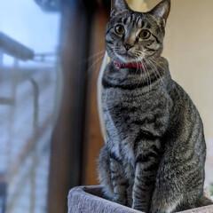 長毛猫/キジシロ/キジトラ/ペット同好会/ニャンコ同好会/保護猫 今日から6連休✨ 嬉しいにゃ~🎶 猫まみ…