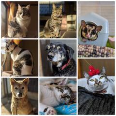 エキゾチックアニマル/Mix猫/MIX犬/長毛猫/キジシロ/キジトラ/... 今年最後の投稿は家族全員集合で😸😸😸😸😸…
