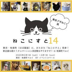 ペット同好会/にゃんこ同好会/兄妹猫/保護猫/キジシロ/ねこにすと14 2/1から マルイ有楽町で開催される ね…