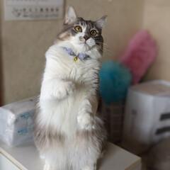 ねこじゃらし/ペット同好会/にゃんこ同好会/立っち猫/保護猫 じゃらし🌾 楽し~😸🎶