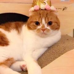 お誕生日おめでとう/これからもずっと一緒/うちの子自慢 3歳のお誕生日🎂