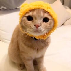 被り物/かわいい/にゃんこ/子猫/うちの子自慢 クマさんの帽子かわいい