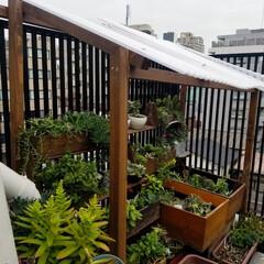 多肉植物/多肉/ベランダガーデニング/ガーデニング/DIY 昨日、屋根を作りました。