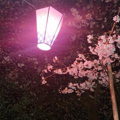 夜桜/花見/春のフォト投稿キャンペーン/LIMIAおでかけ部/おでかけ/おでかけワンショット 桜の名所、夜桜(1枚目)