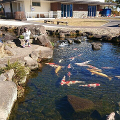 餌やり/デカイ鯉/鯉/LIMIAおでかけ部/おでかけ/風景/... 淡水魚だけの水族館にて