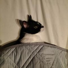 「お部屋は冷房おやすみタイマーで28度。 …」(1枚目)