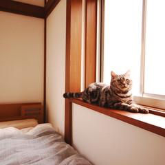 リノベーション/ネコ/猫/ペット/リフォーム/戸建てリノベーション/... ネコと暮らす。