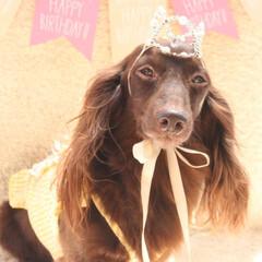 お誕生日おめでとう/愛犬/わんこなしでは生きていけません/わんこ仲間募集/犬好きと繋がりたい/犬好きな人と繋がりたい/... ☆Happy 11st birthda…(1枚目)