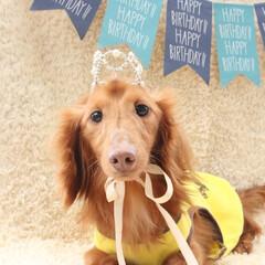 お誕生日おめでとう/わんこなしでは生きていけません/わんこ仲間募集/犬のいる生活/犬のいる暮らし/犬好きな人と繋がりたい/... CHALU ☆Happy 5st bi…