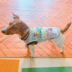 LIMIAペット同好会/フォロー大歓迎/ペット/ハンドメイド/ペット仲間募集/犬/... ¥500の子供服をリメイクしてもらいまし…