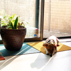 寄せ植え/葉/緑/観葉植物/ダイソー/セリア/... 2年前にDAISOで買った観葉植物🌿 よ…