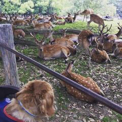 「マリンと一緒に奈良公園に行った時の写真が…」(5枚目)