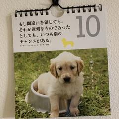 ダイソー/カレンダー/プチプラカレンダー ダイソーで見つけた日めくりカレンダー。 …