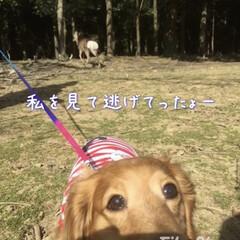 「マリンと一緒に奈良公園に行った時の写真が…」(2枚目)