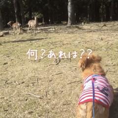 「マリンと一緒に奈良公園に行った時の写真が…」(1枚目)