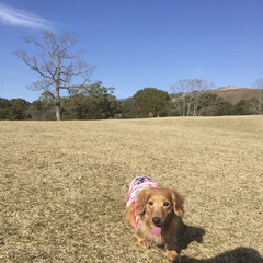 「マリンと一緒に奈良公園に行った時の写真が…」(3枚目)