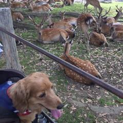 「マリンと一緒に奈良公園に行った時の写真が…」(4枚目)