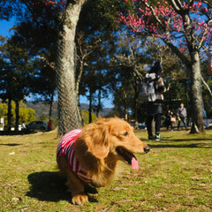 花/カメラ/LIMIAペット同好会/フォロー大歓迎/ペット/ペット仲間募集/... 奈良公園に 梅が咲いていました~♪  夜…(2枚目)