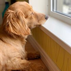 ミニチュアダックスフンド/犬/フォロー大歓迎/LIMIAペット同好会/わんこ同好会/至福のひととき/... 時間を忘れて 外をボーッと眺めるのが 私…(3枚目)