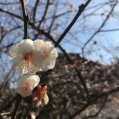 風景 昨日、近所散策中に咲いてるのを見つけまし…
