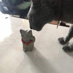 動物モチーフグッズ/雑貨 ロシアンブルーの招き猫を見つけちゃいまし…