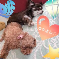 犬/ペット/お昼寝 今日も仲良く一緒に昼寝中✨✨