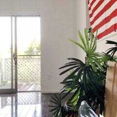 衣替え/ボタニカル/DIY/ダイソー/インテリア/リフォーム/... 先日、部屋丸ごと塗り替えました☆(o^^…